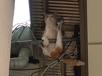天井ネコ5