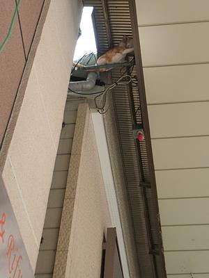 天井ネコ2