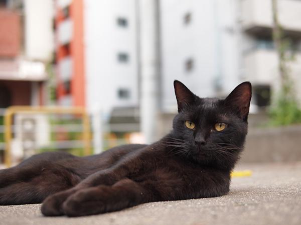 黒ネコくん男前2