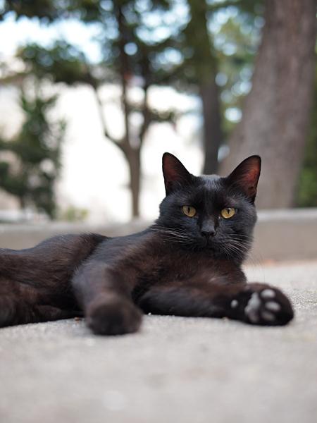 黒ネコくん男前1