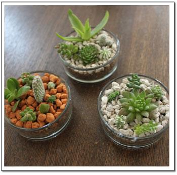 多肉葉植物寄せ植え2