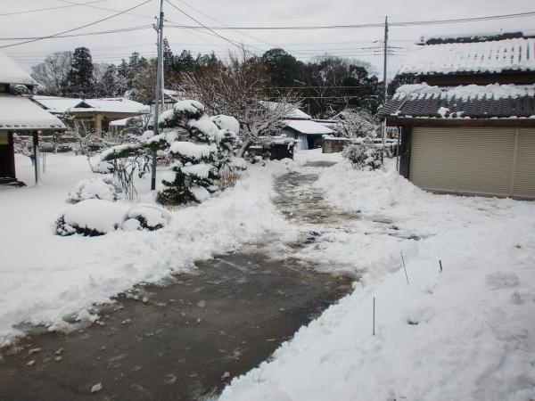 yukikaki10.jpg
