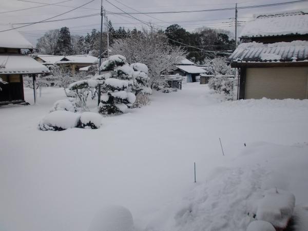 yukikaki.jpg
