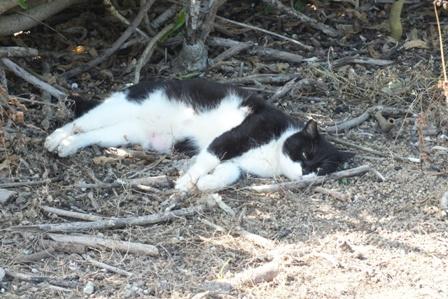 DSCF8522 - 猫島清掃