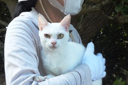 DSCF8542 - 猫島保護猫