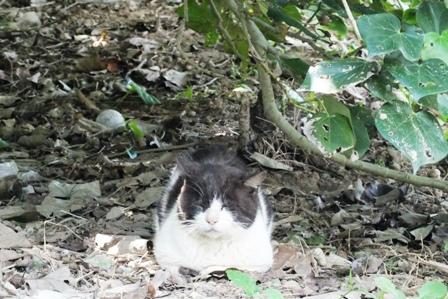 DSCF8579 - 猫島清掃