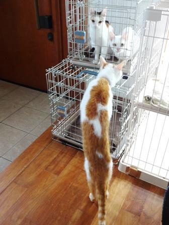 DSC01865 - 猫島保護猫
