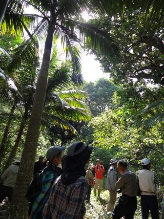 椰子の木林