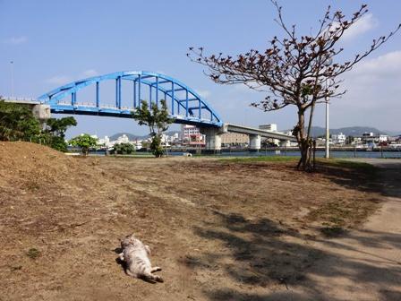 DSC02031 - 橋