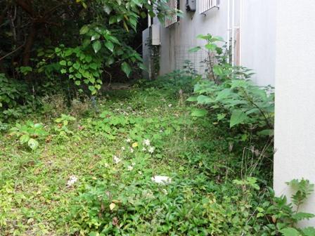 DSC02861 - 草刈り前