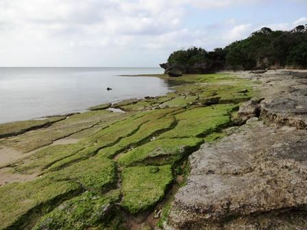DSC02911 - 浜