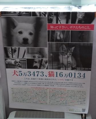 DSCF2653ポスター