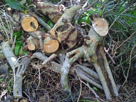 カット済みの木