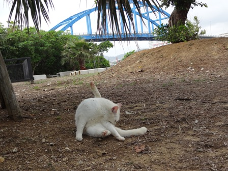 DSC03175 - サザゲ猫