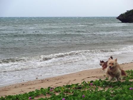 7月12日朝クリとココ台風散歩