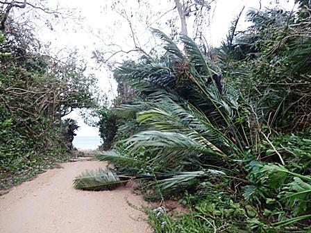 DSC09294 - 台風後の散歩