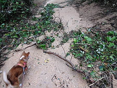 DSC09296 - 台風後の散歩