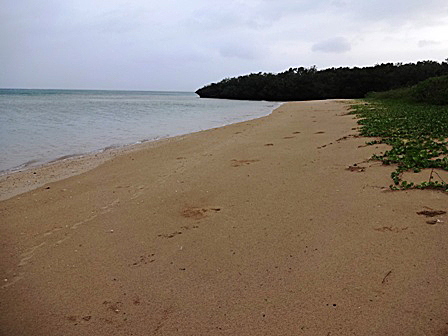 DSC09297 - 台風後の浜