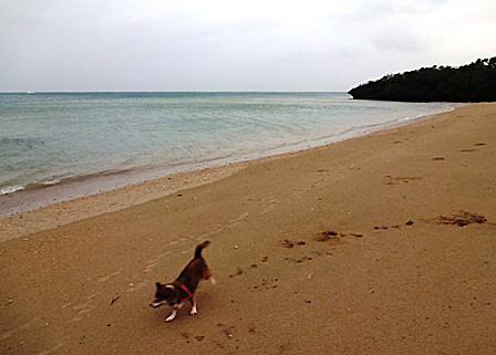 DSC09298 - 台風後の散歩