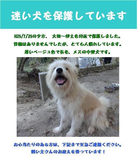 伊土名保護犬