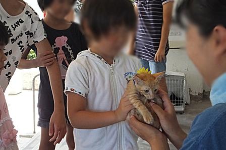 DSCF7265 - 子猫