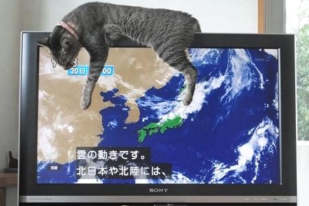 天気予報+ビ~