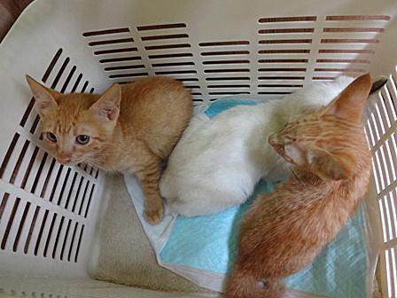 DSC000563子猫