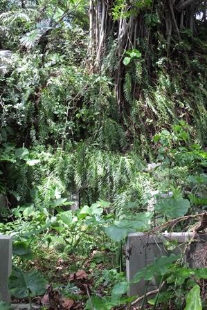 崖の廃棄墓