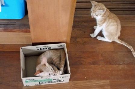 あ~いい箱だ