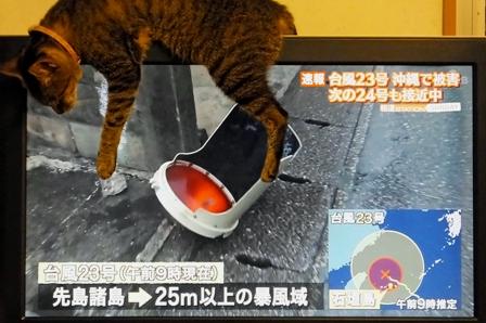 ビ~TV10月6日10時07分