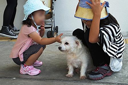 DSCF0035 - 白い犬