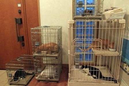 10月31日子猫朝食中