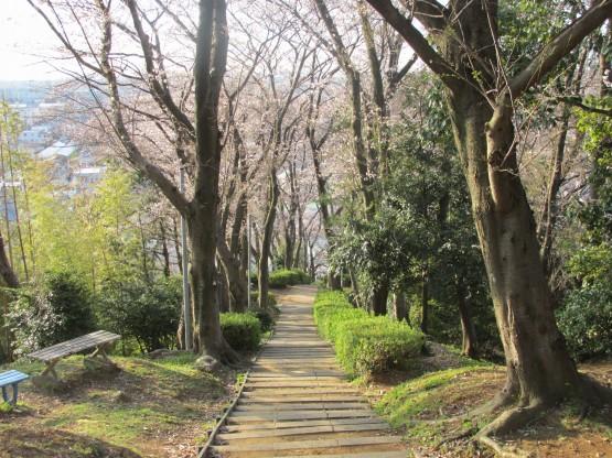 25.3.22八幡山桜 037_ks