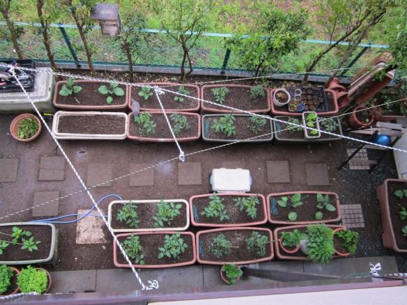 25.04.24家庭菜園 005_ks