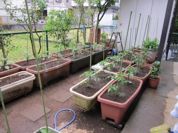 25.04.24家庭菜園 032_ks