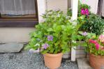 24.05.21家庭菜園 085_ks