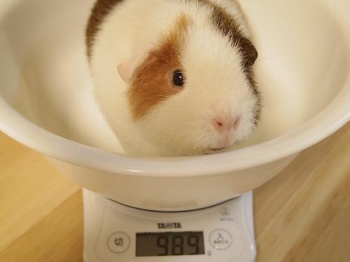体重測定2014年1月26日3