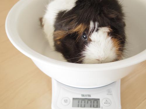 体重測定2014年2月2日3