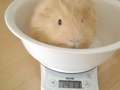 体重測定2014年2月2日1