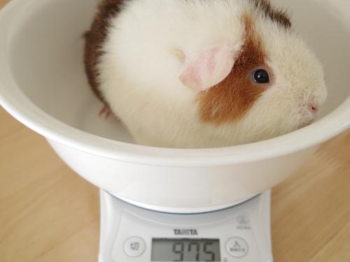 体重測定2014年2月2日2