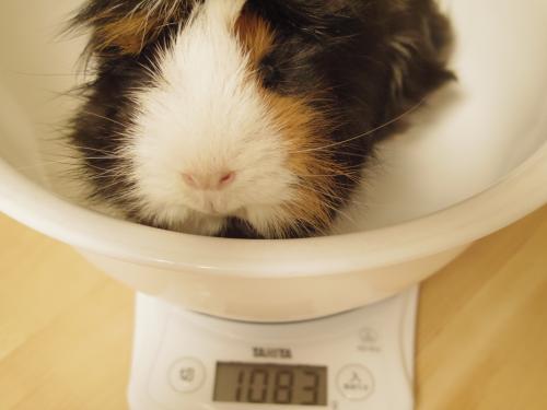 体重測定2014年2月9日2