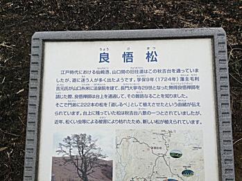 akiyoshi_renge01.jpg