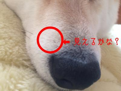 moblog_605b5f90.jpg