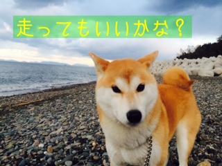 moblog_dd6e0c95.jpg