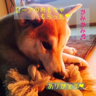 moblog_e65aed3e.jpg