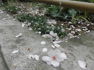 花はさかりにを見るものかは。