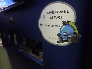 shinkai23.jpg