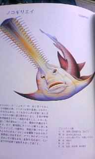 ネガ・SAN オフィシャルブログ powered by ameba-100527_1513~020001.jpg