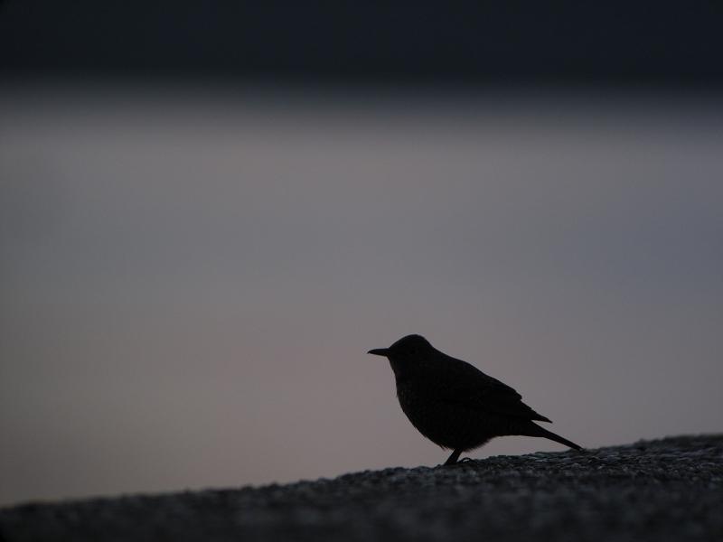 isohiyodoria.jpg