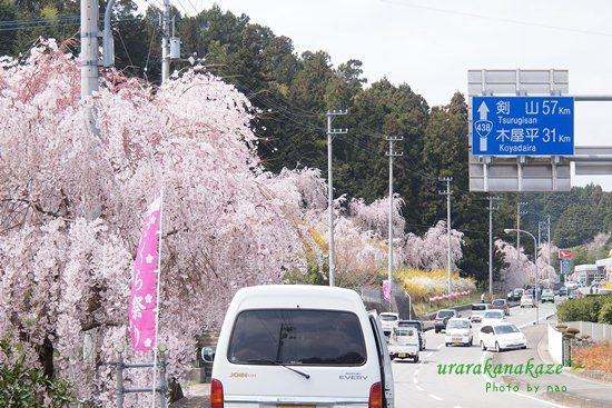 神山町 さくら街道
